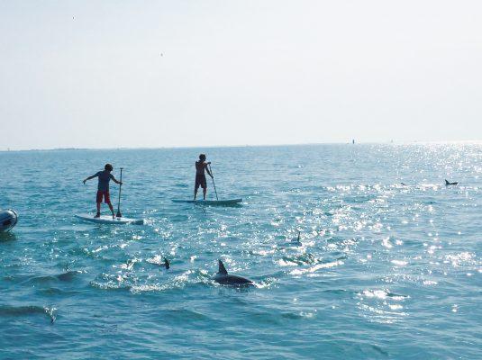 paddle au milieu des dauphons
